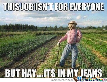 Can Never Go Wrong With Scarecrow Puns