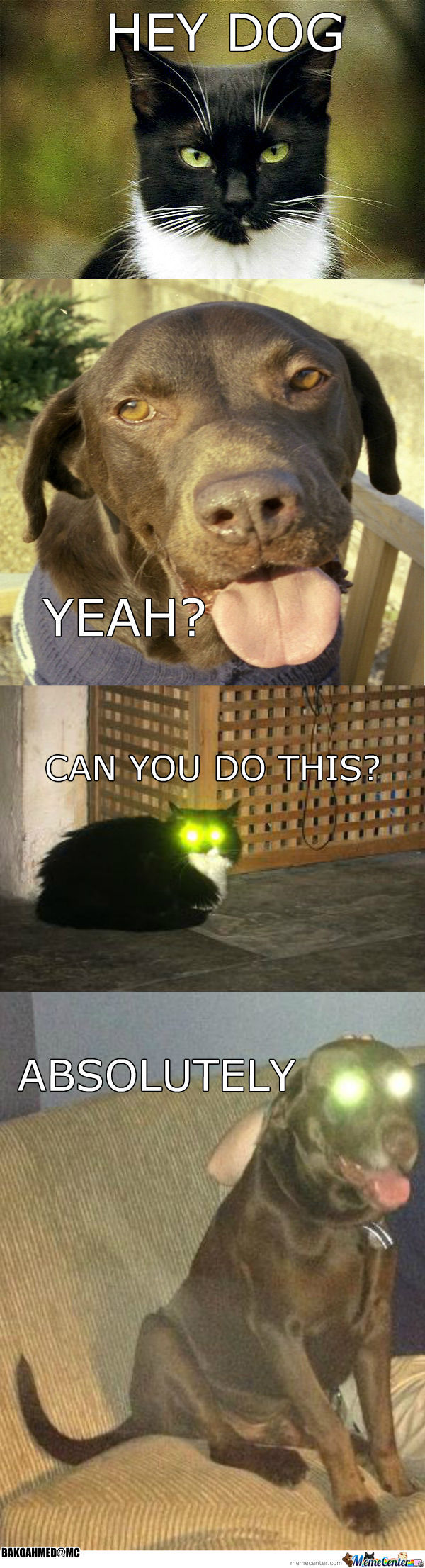 Cat & Dog Laser Eyes