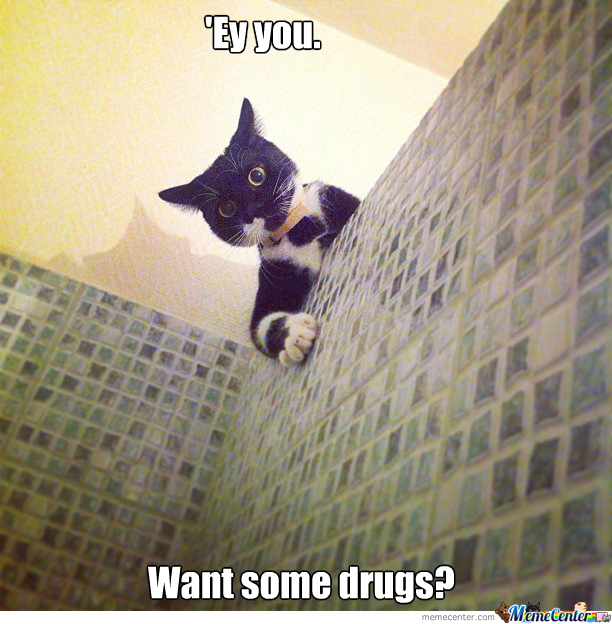 Cat High As F*ck