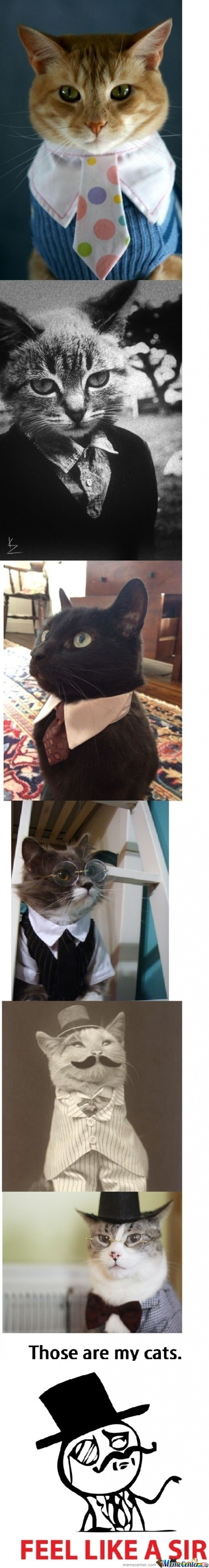 Cat Like A Sir