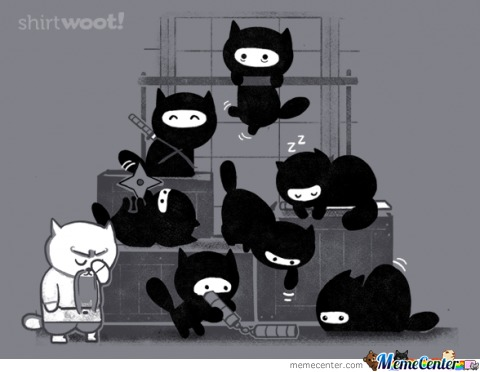 Cat Ninjas: Adorable But Deadly :3