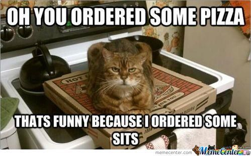 Cat Ordered Sits