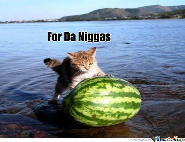 Cat Pushing Watermelon Out Of A Lake