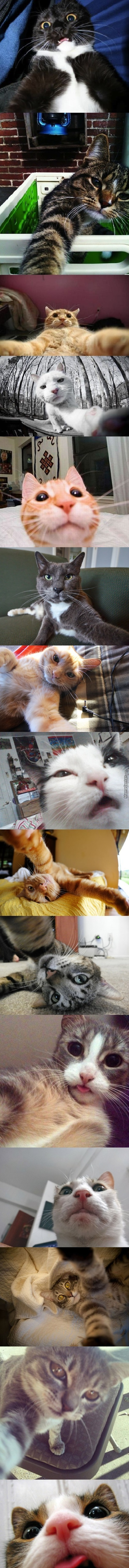 Cat Selfies [Sorry Long Post...] [Do What You Want With These]
