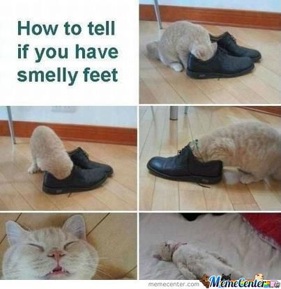 Cat Smells Feet