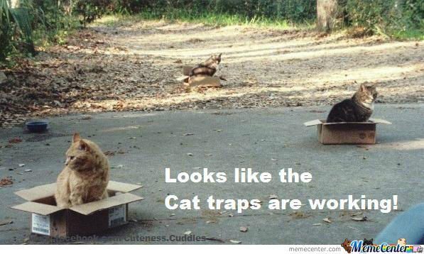 Cat-Trap-Olis