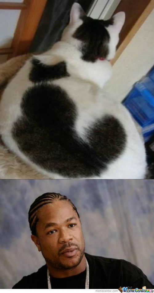 Cat Within A Cat
