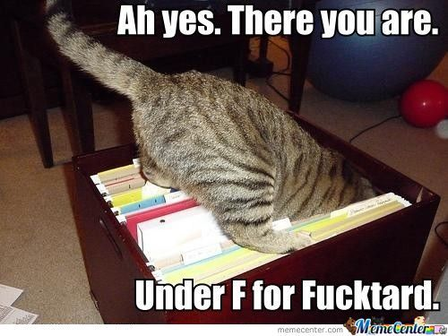Cats Can File?!!
