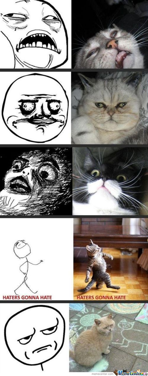 Cats Doing Rage Faces