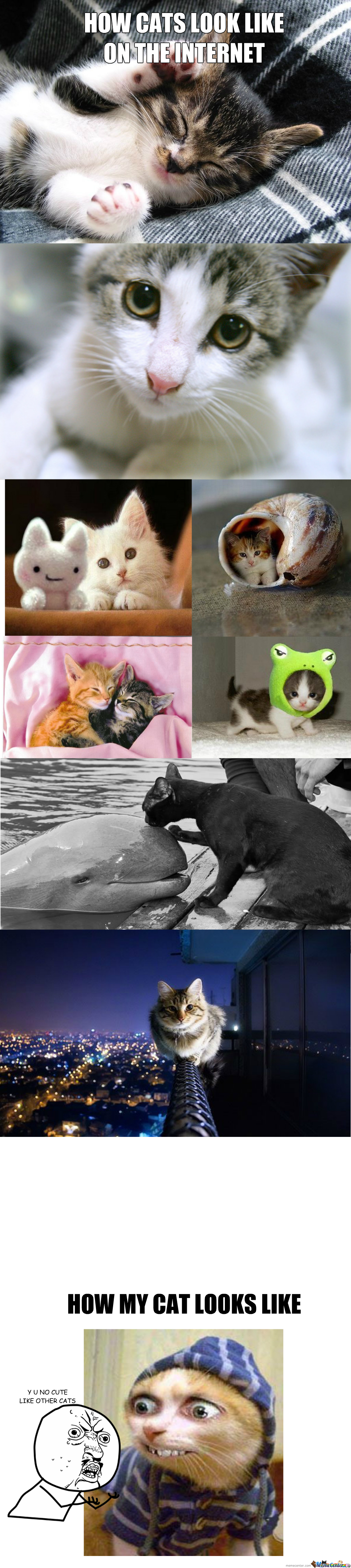 Cats On The Internet