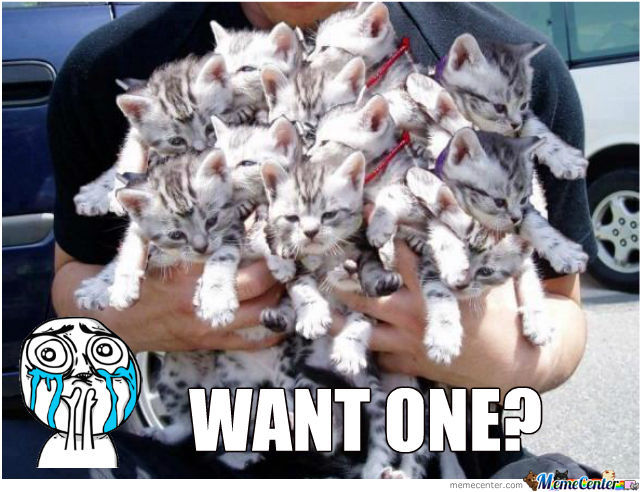 Cats Overload