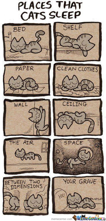 Cats Sleeping Capacity