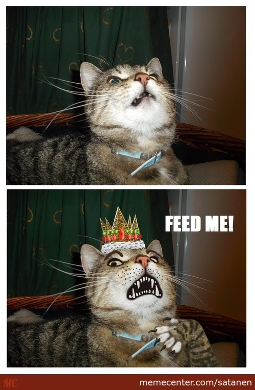 Cats, Think They Are Royal And Shit.