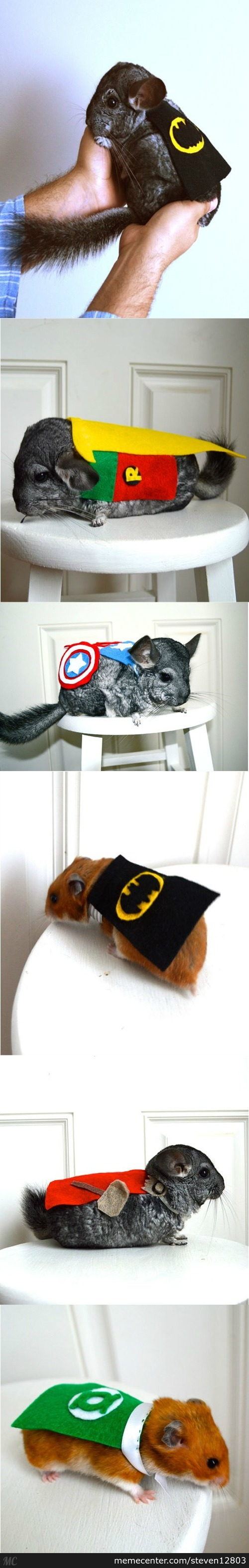 Chinchillas Dressed As Superheroes