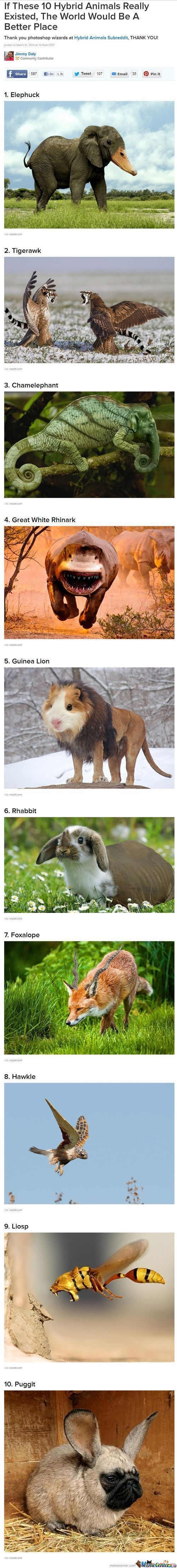 Choose Your Animal!