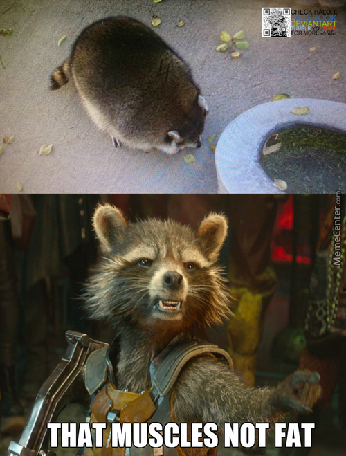 Chubby Raccoon