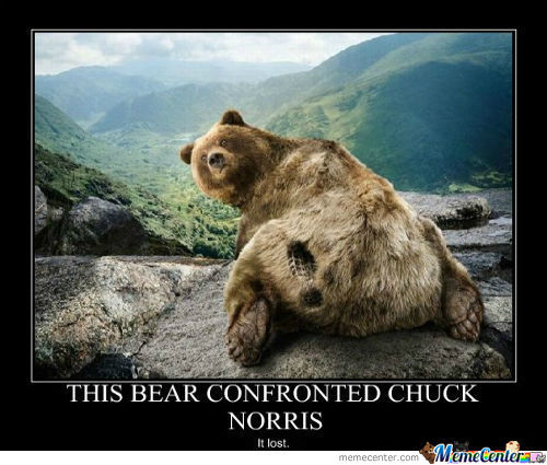 Chucknorris Confronts A While Bear