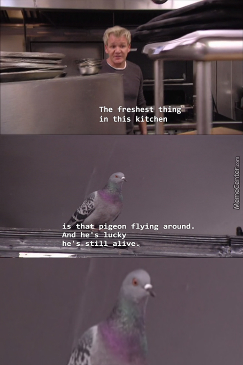 *close Up To Pigeons Face*