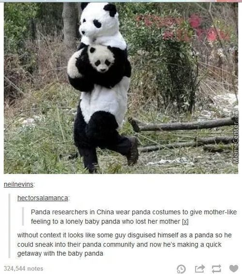 Come Here Little Pandas(More Tumblr)