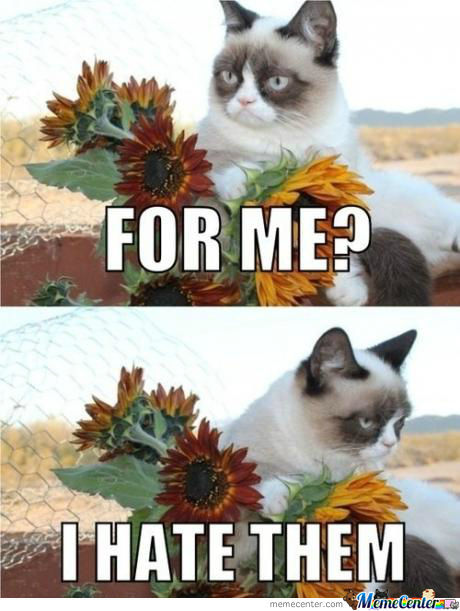 Come On Grumpy Cat ..
