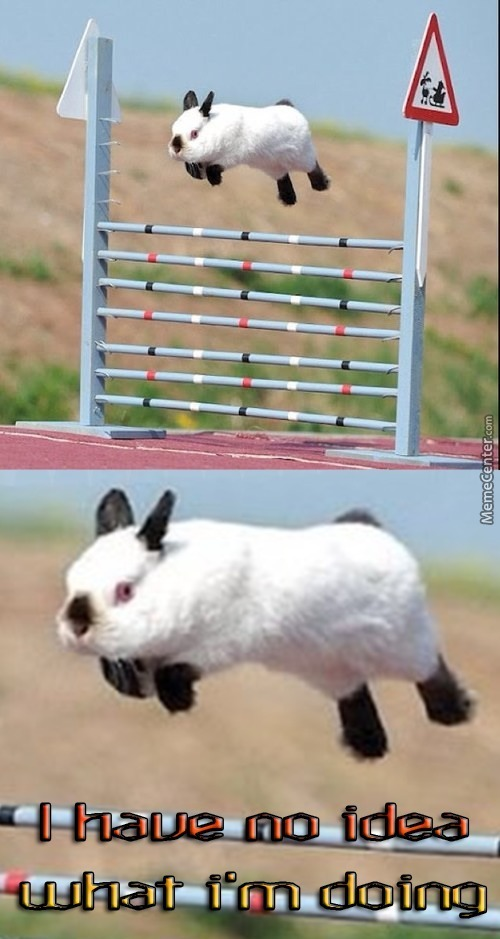 Confused Bunny Is Confused