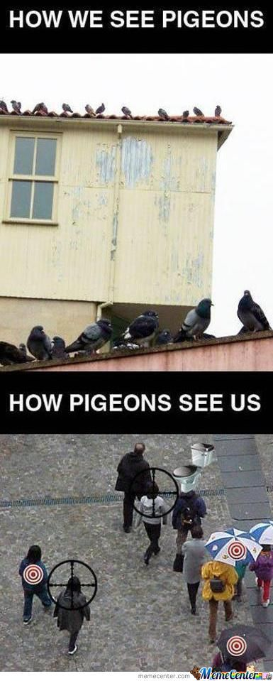 Counter Strike Pigeons