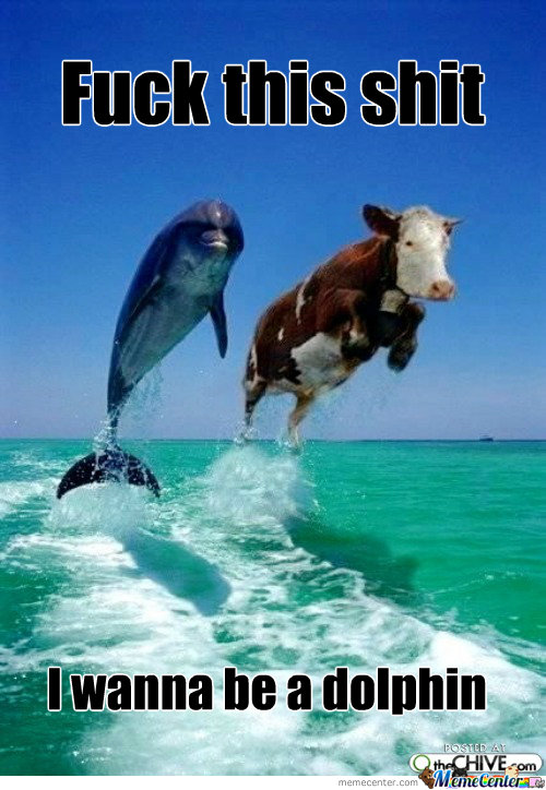 Cow Dolphin