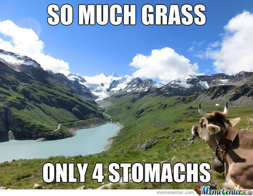 Cow Problems