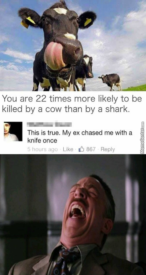 Cows Are Deadly