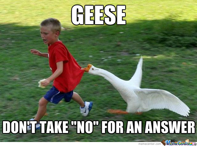 Crazy Geese