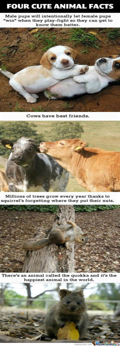 Cute Animal Facts.