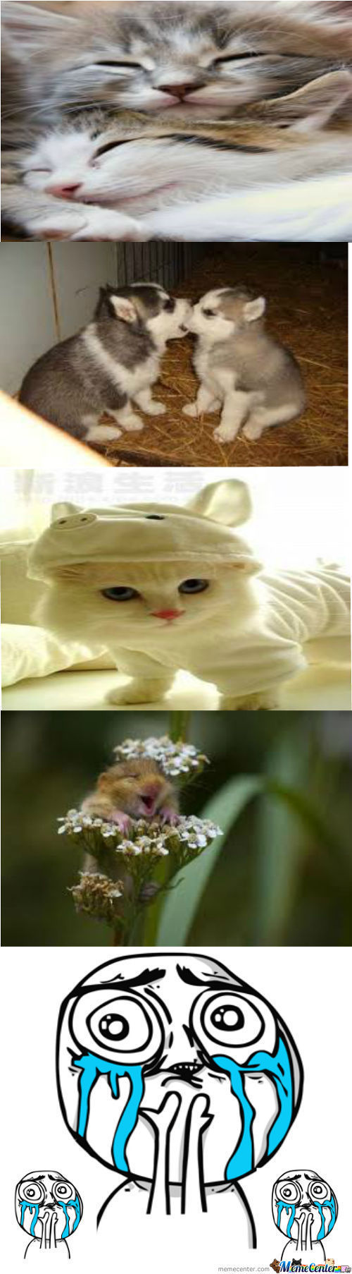Cute Animals Part 1 :d
