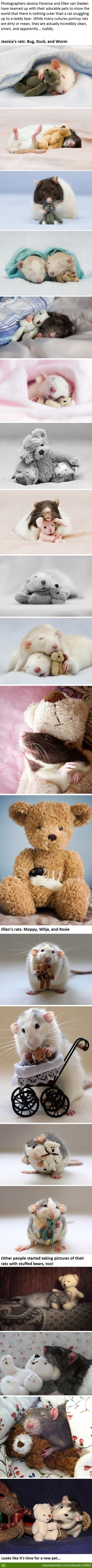 Cute Pictures Of Rats Exist?