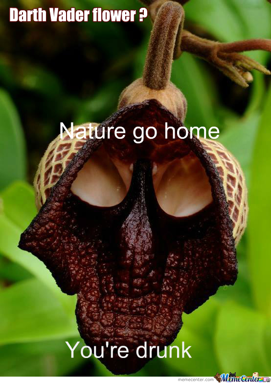 Darth Vader Flower.nature Go Home , You're Drunk