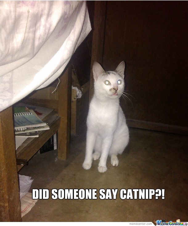 Did Someone Say Catnip?!