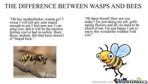 Difrence Between Wasp And Bees