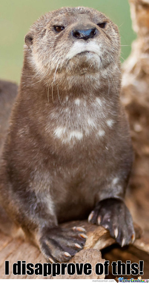 Disapproval Otter!