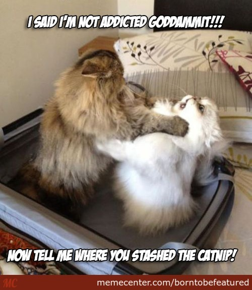 Do Something Now. Send Your Cat To Rehab...