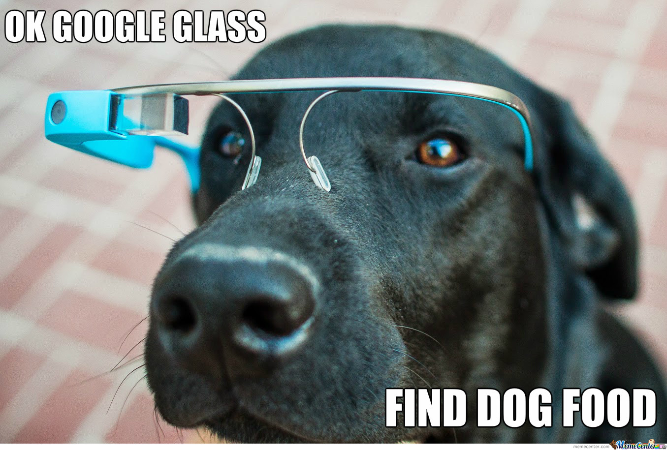 Dog Using Google Glass