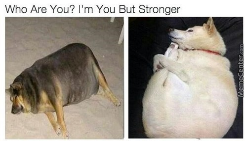 Doggo Is Strongo