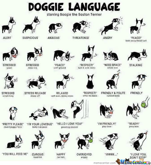 Doggy Language