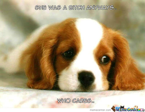 Dogs After Breakups