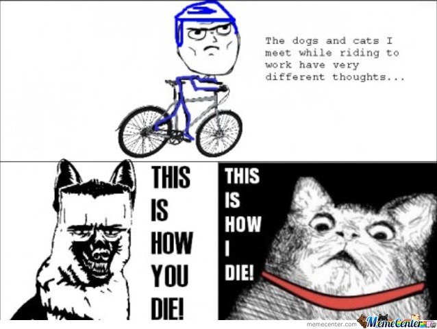 Dogs And Cats Think Differently.