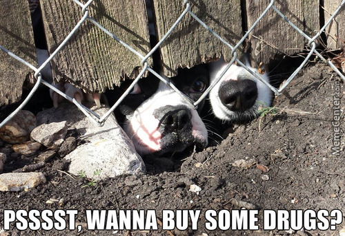 Dogs Give A Hefty Bargain For Catnip