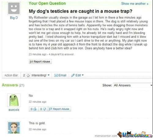 Dog's Testicles