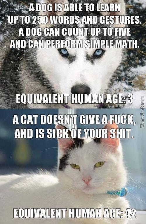 Cats Vs Dogs Memes. Best Collection of Funny Cats Vs Dogs ...