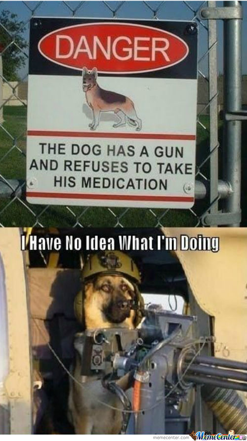 funny dog pics with guns - photo #29