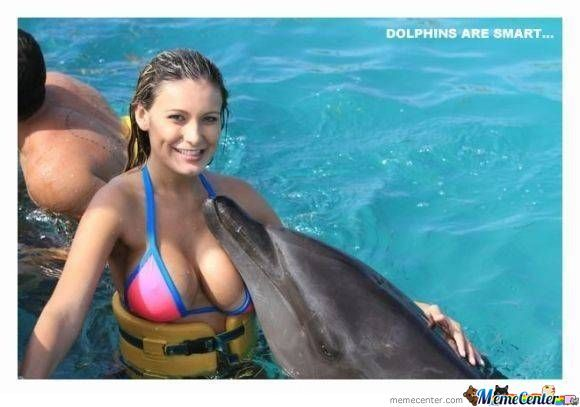 Dolphins Are Smart