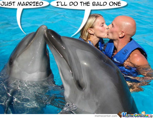 Dolphins Pt-8 - Just Married