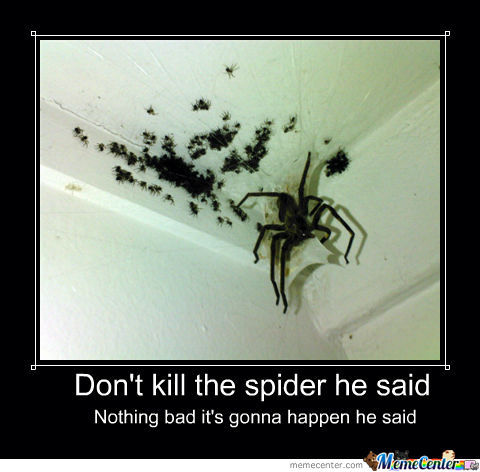 Don 39 t kill the spider by mustnotfap meme center for How to stop spiders coming in your house